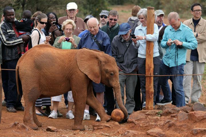 Elephant Orphans and Ivory